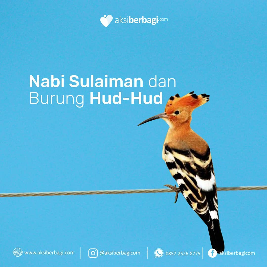 Kisah Nabi Sulaiman dan Burung Hud-hud